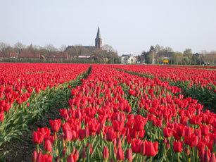 Kruisland Met Bloemenveld