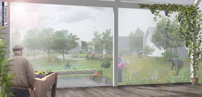 Woonwijk Olmentuin In Steenbergen Mag Er Komen; Omwonenden Stappen Naar Rechter